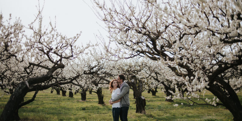 Niagara-on-the-Lake orchard Engagement Portraits by Daring Wanderer // www.daringwanderer.com