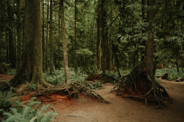 Hiking in Tofino at Cathedral Grove, BC // www.daringwanderer.com