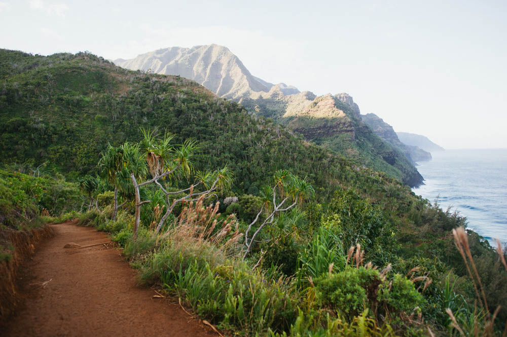 Daring Wanderer Photography - Daring Wanderer - Travel Photography - Kauai Travel Photography - Kauai - Hawaii - Kalalau Trail - Kalalau Beach - Na Pali Coast - Hawaiian beach - Hawaiian sunset - Waimea Canyon - Poipu Beach - Kauai Coffee Company - Coffee Plantation - Kauai Coffee - Coffee plant
