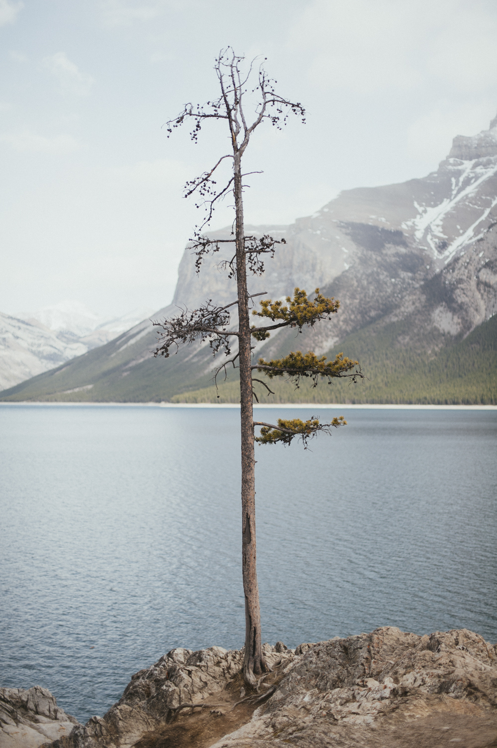 Lone tree at Lake Minnewanka in Alberta