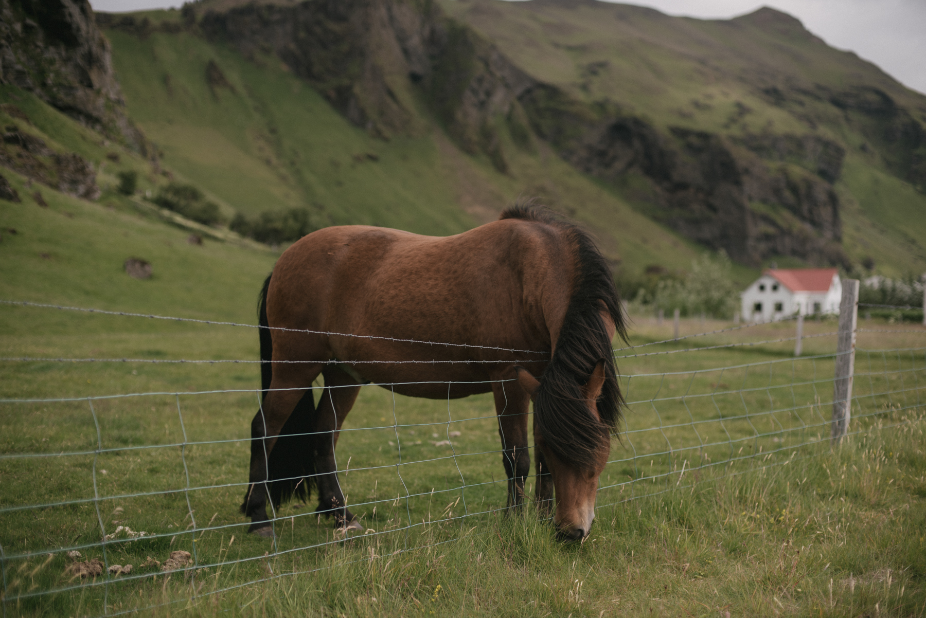 Daring Wanderer Photography - Daring Wanderer - Iceland travel photography - Iceland - West Fjords - Hornstrandir - Hornbjarg - hiking - adventure - explore - camping - mountains - majestic landscapes - Icelandic horses - Icelandic landscape