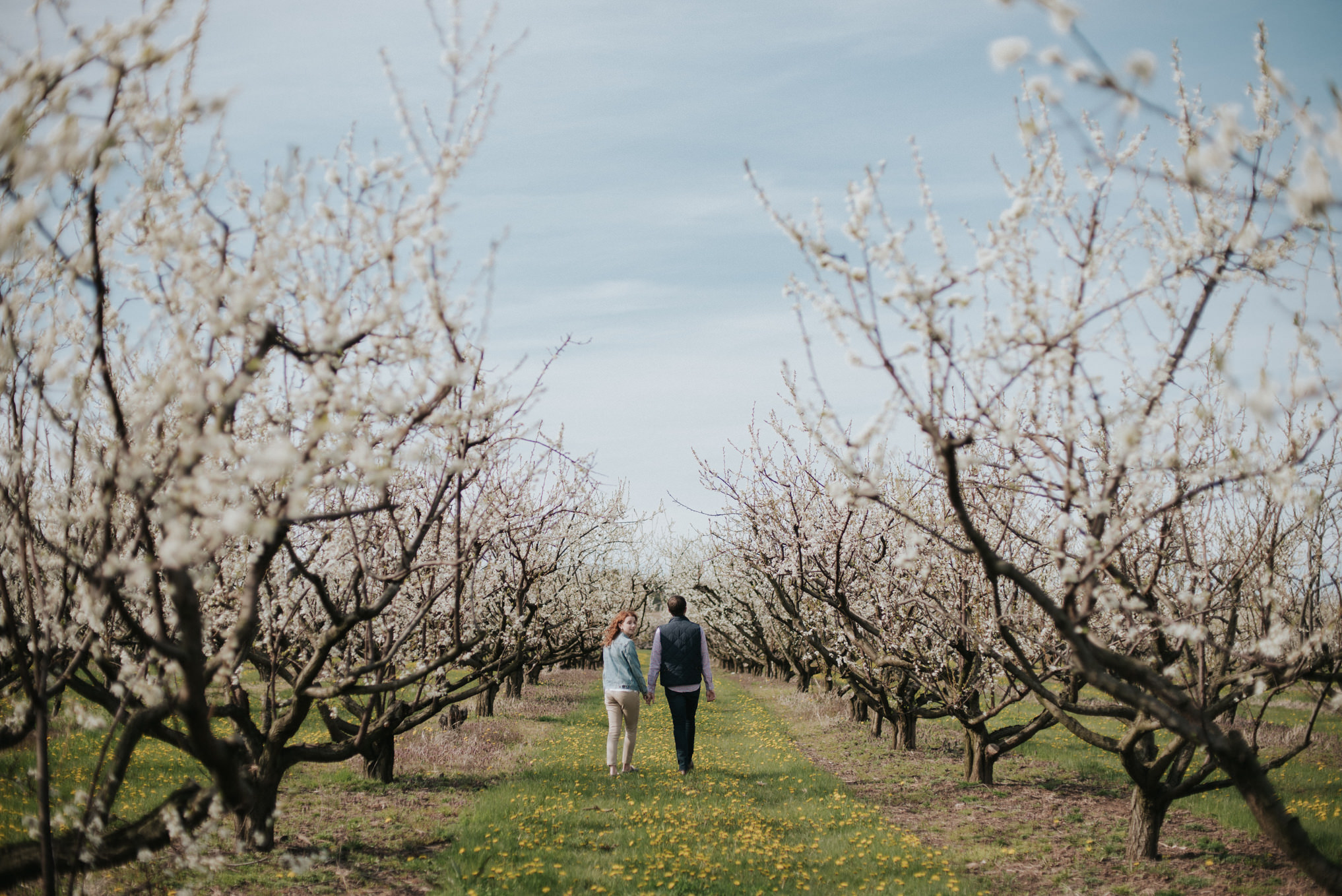 Spring bloom orchard engagement shoot by Daring Wanderer // www.daringwanderer.com