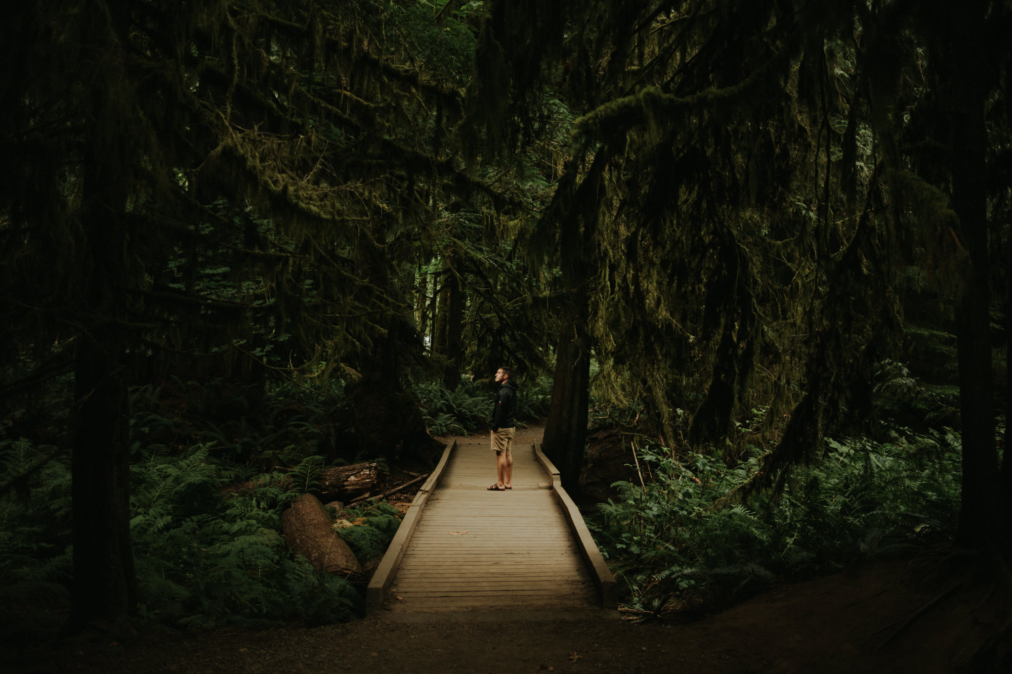 Cathedral Grove, Tofino // Daring Wanderer: www.daringwanderer.com