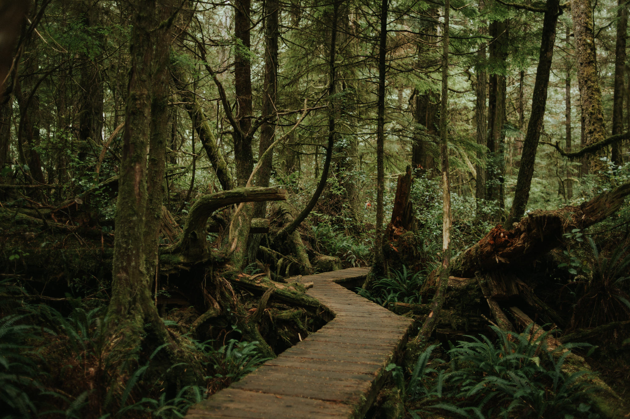 Hiking in Tofino. Rainforest Trail hike in Pacific Rim National Park // Daring Wanderer: www.daringwanderer.com