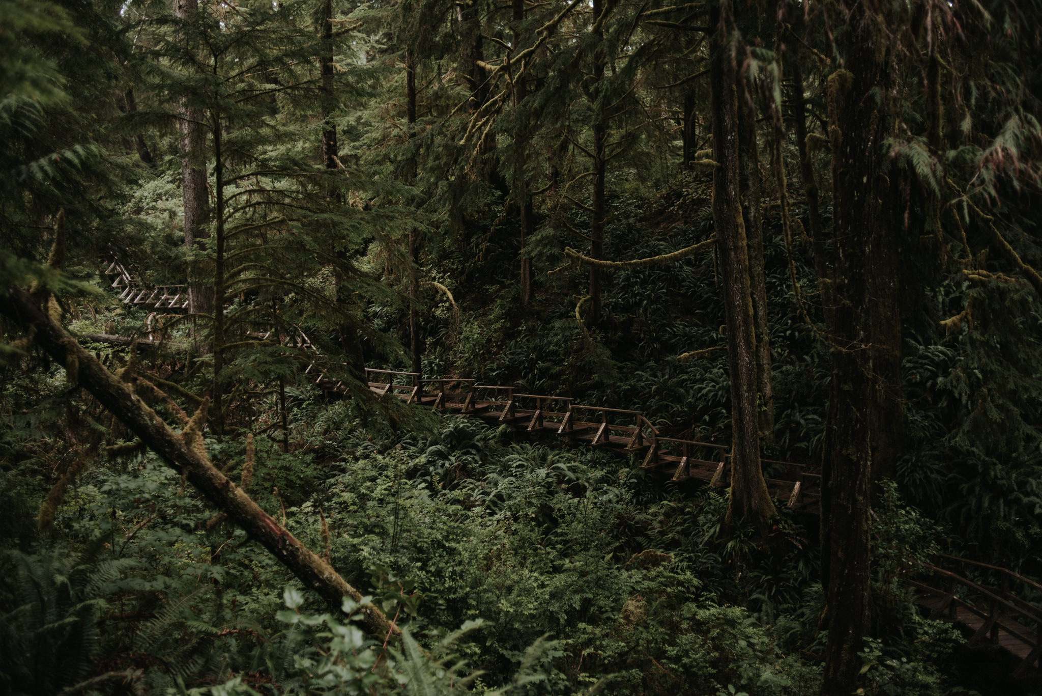 Hiking in Tofino. Schooner Cove trail in Pacific Rim National Park // Daring Wanderer: www.daringwanderer.com