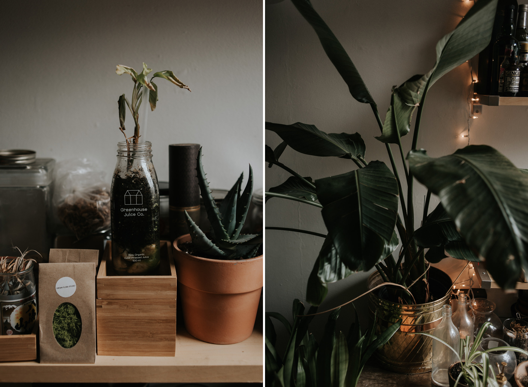 Bohemian hipster apartment with plants // Downtown Toronto Couple Shoot by Daring Wanderer