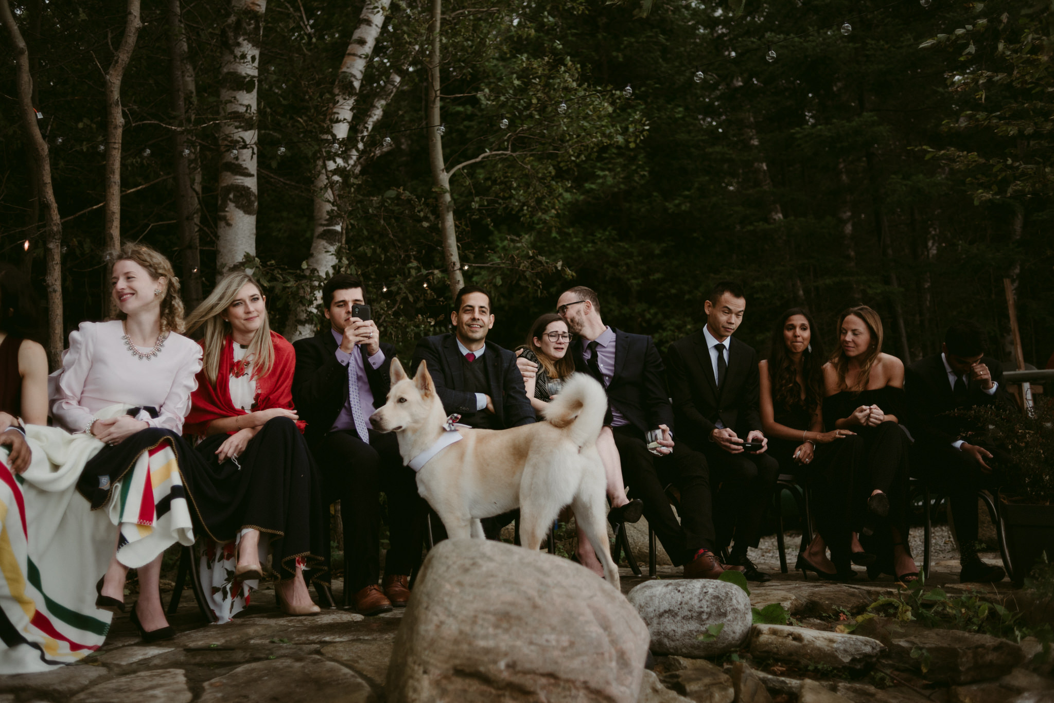 guests and dog at wedding ceremony