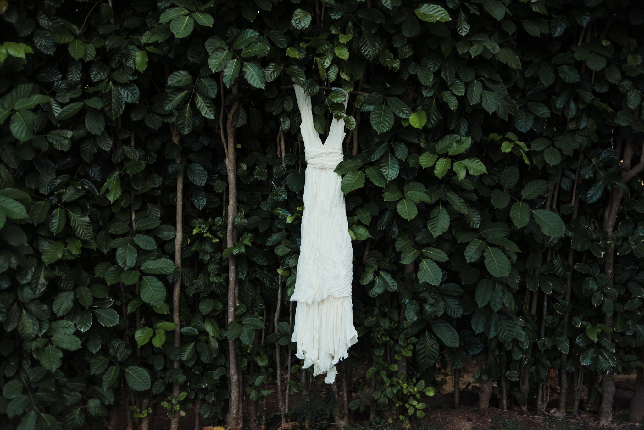 Dress hanging on living greenery wall