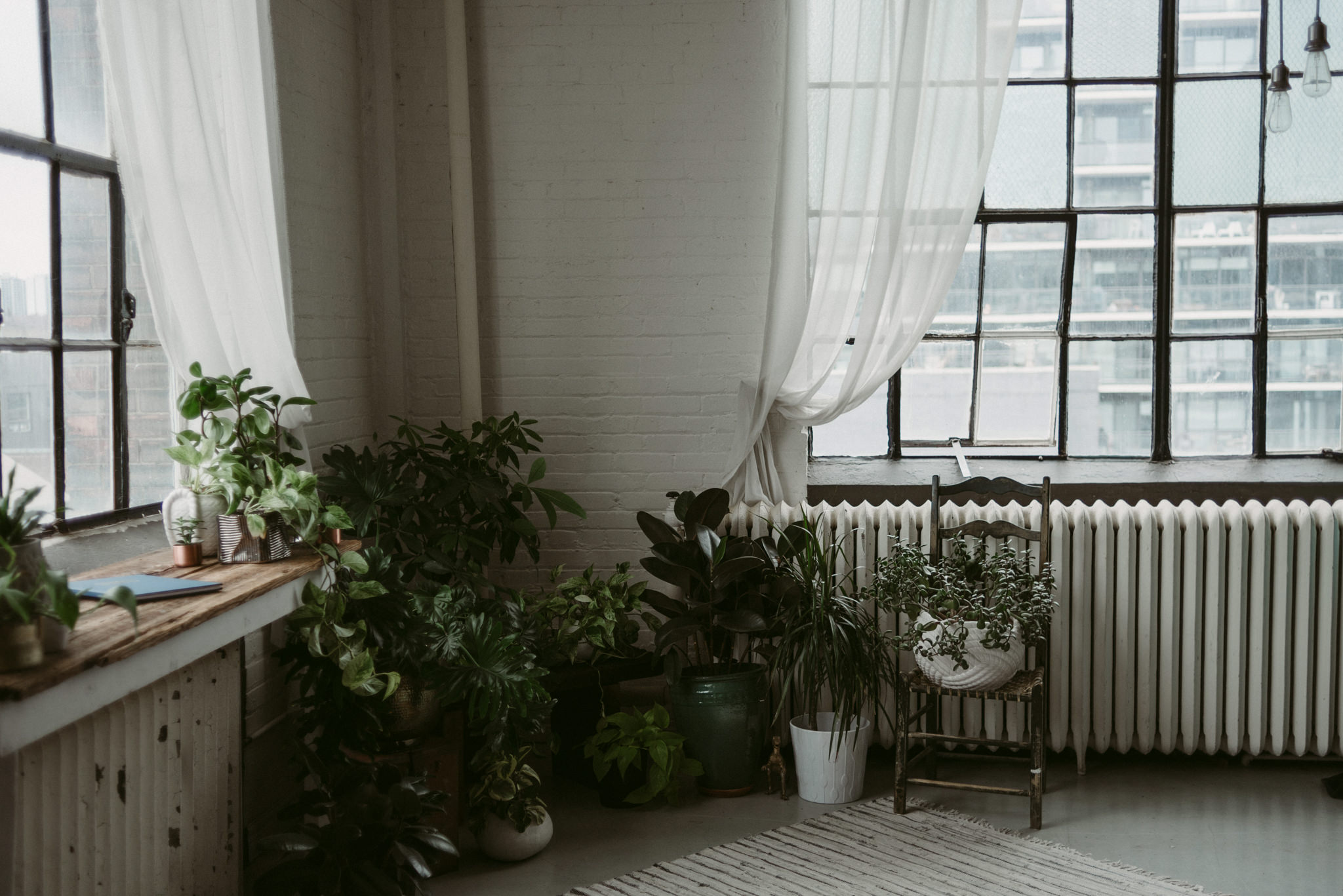 Plants and white brick walls in loft with large windows