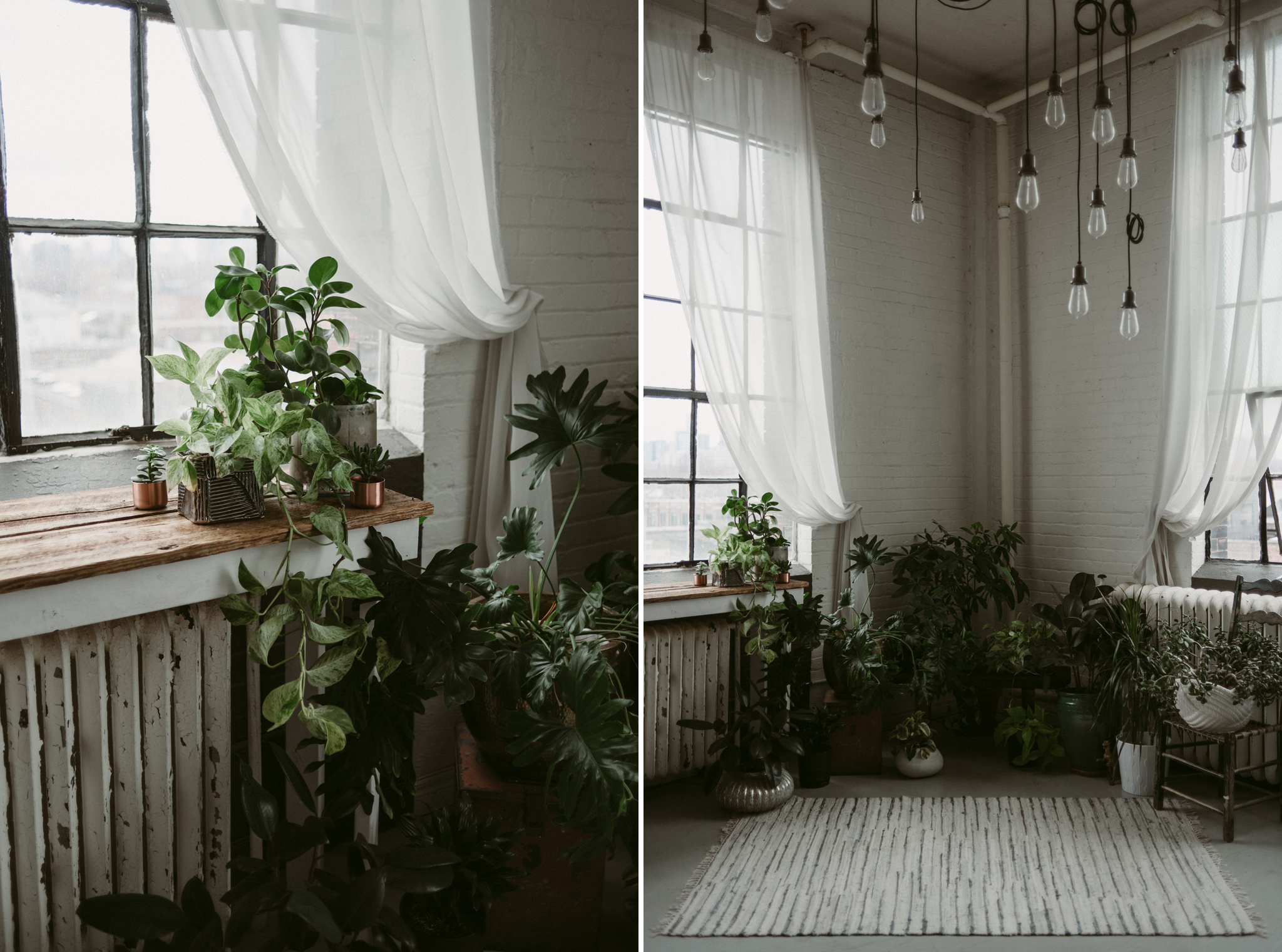 Plants and white brick walls in trendy loft with large windows