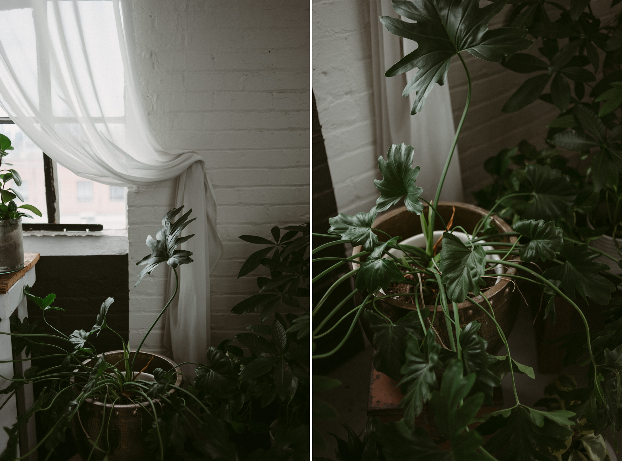 Tropical plants in loft
