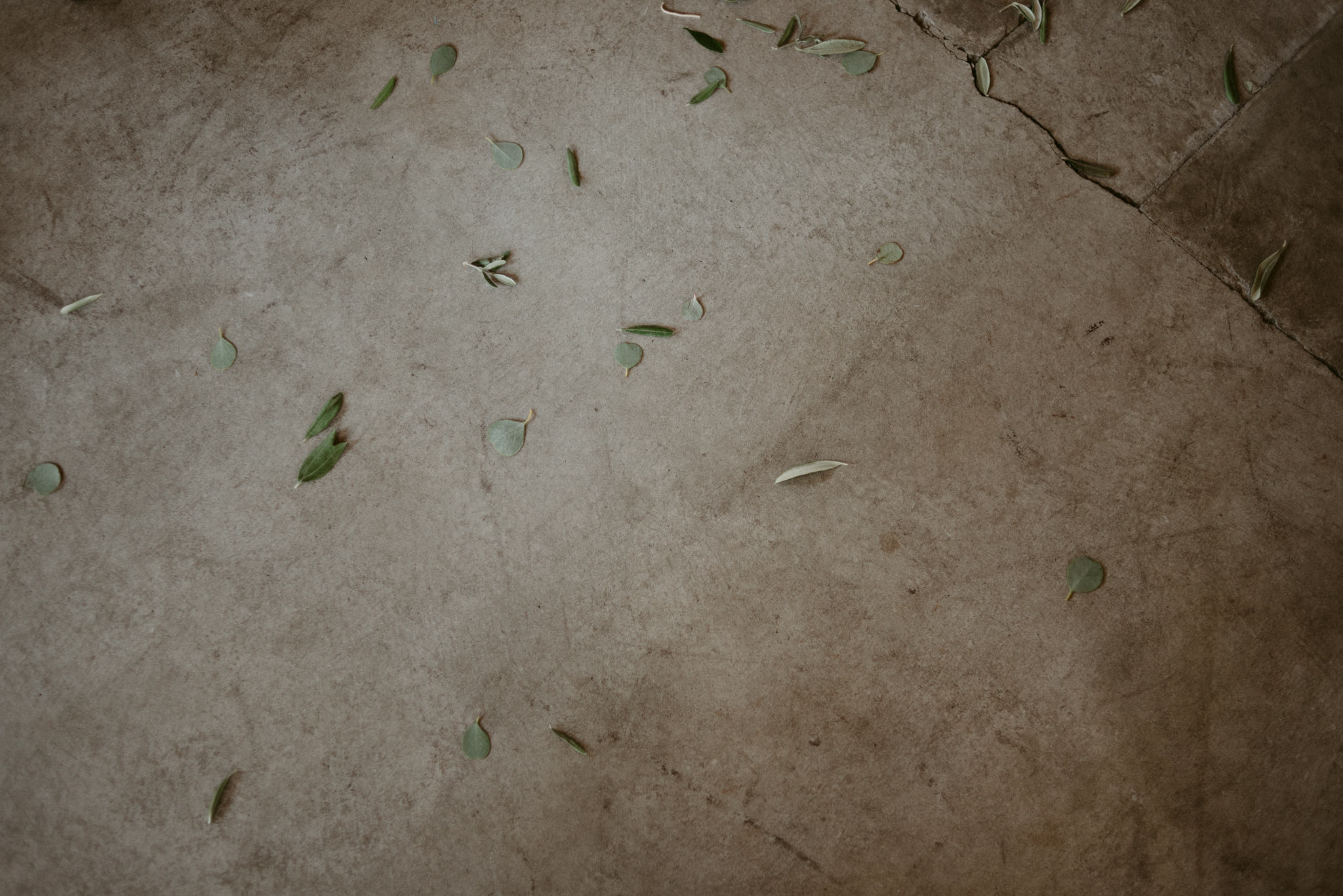leaves on concrete floor