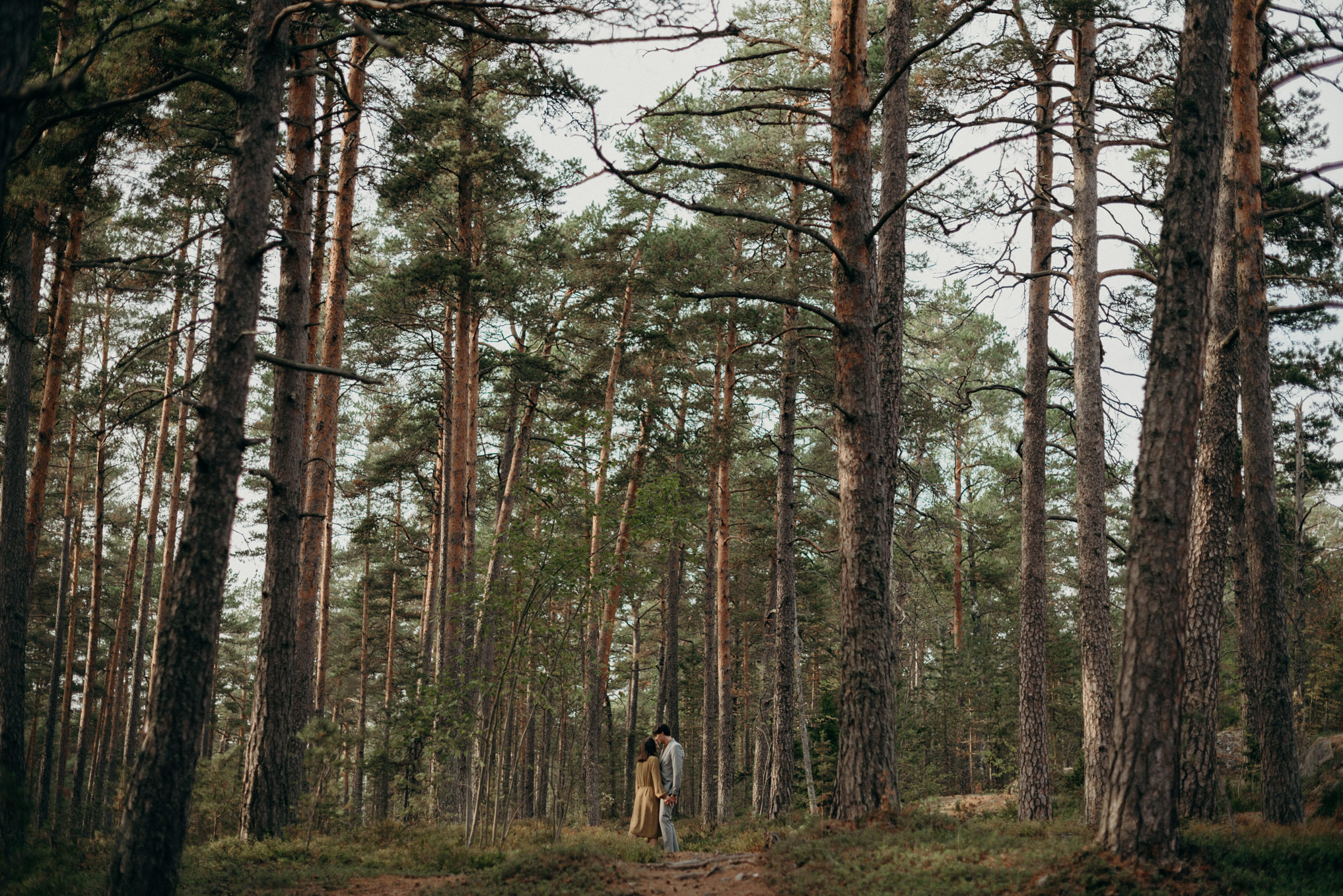 Couple in forest full of pine trees in Finland