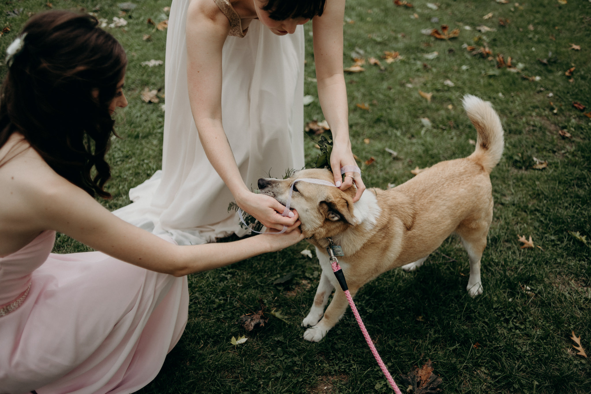 bride putting floral crown on dog