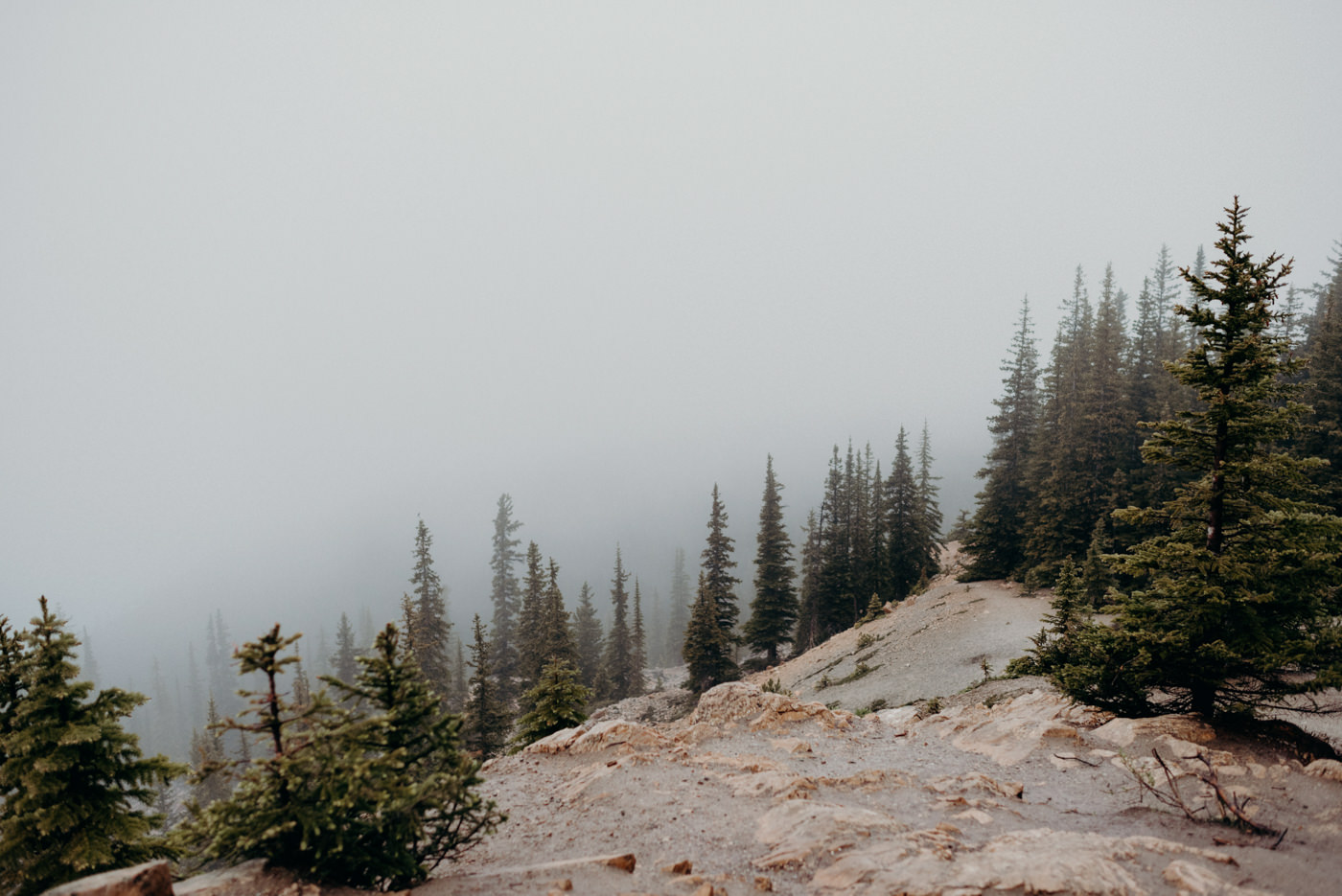 pine trees in fog on a mountain