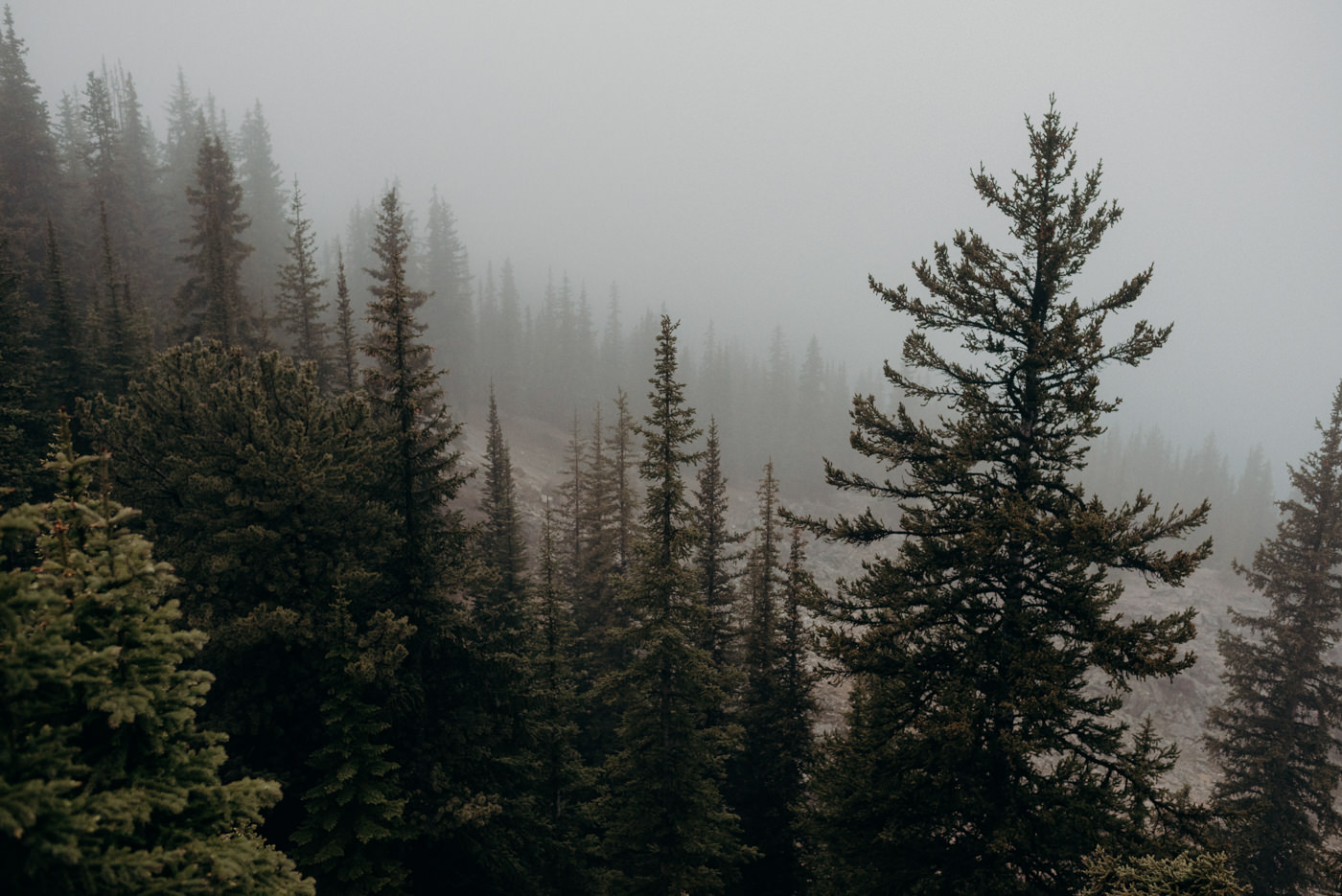 pine trees in fog on top of a mountain