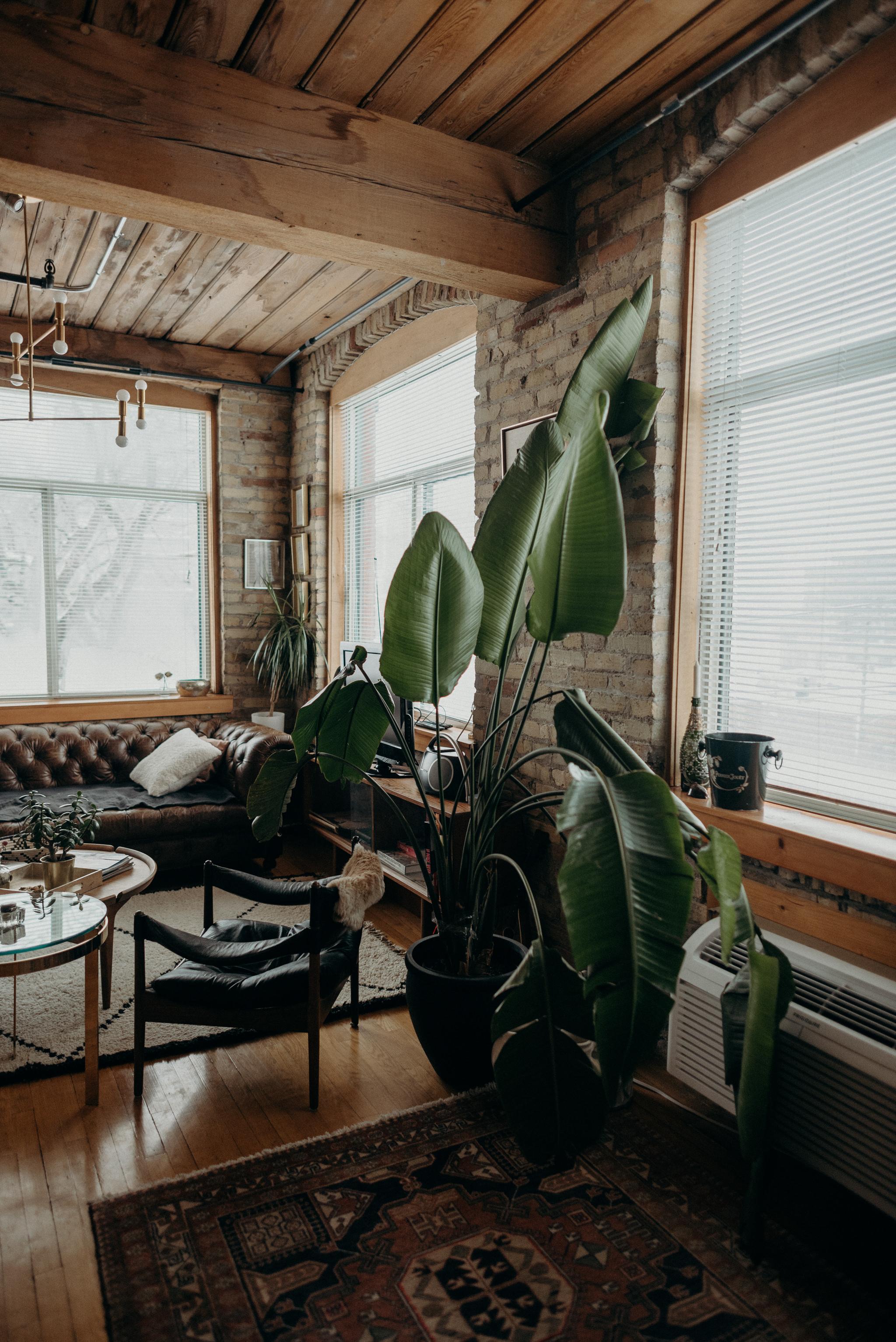 large palm leaf in hip loft