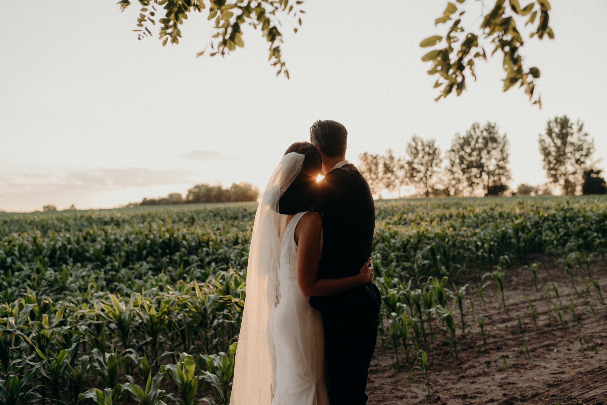 bride and groom watching sunset over corn field in Ontario