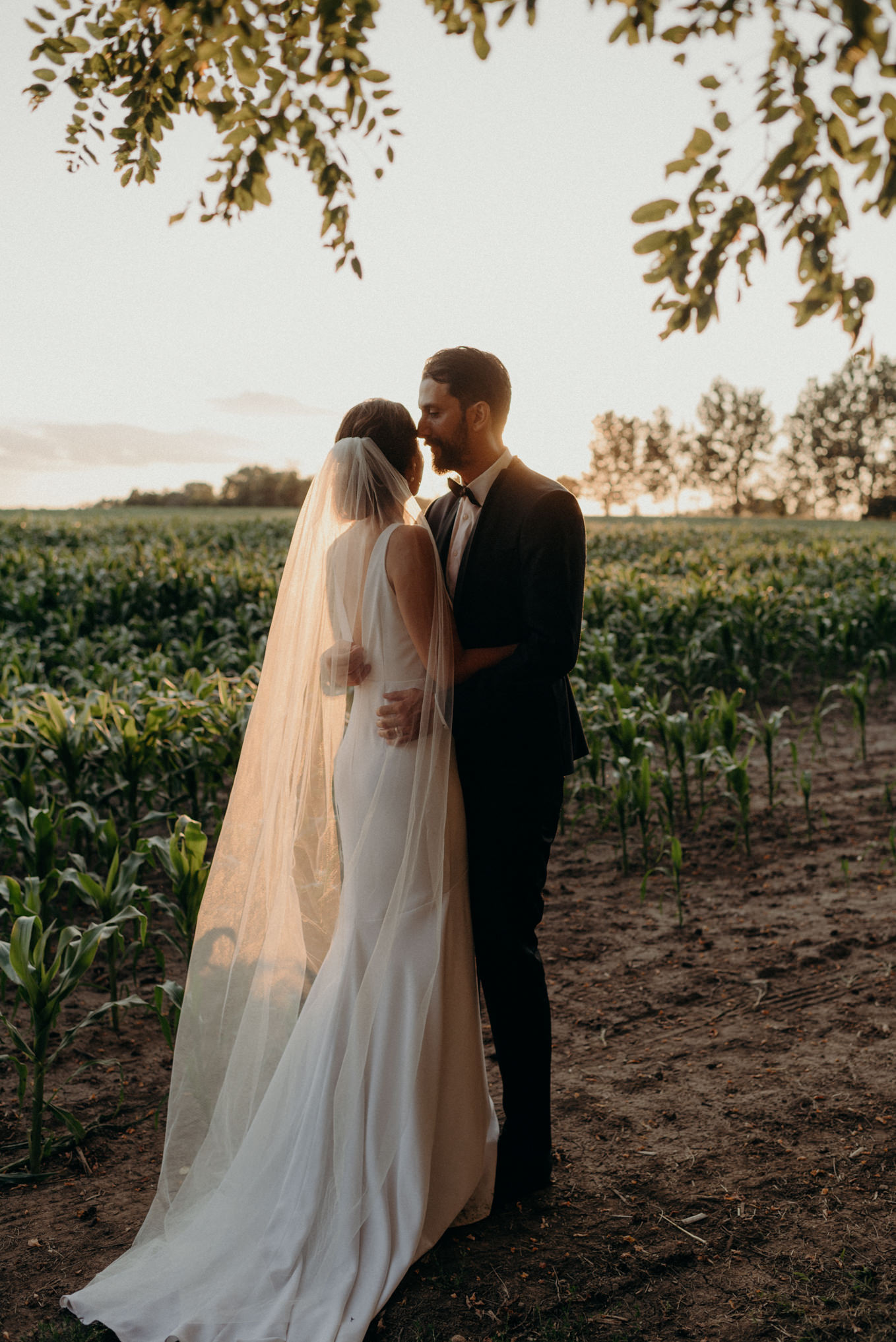 bride and groom watching sunset while hugging in a corn field